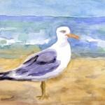 Seagull, West Dennis Beach